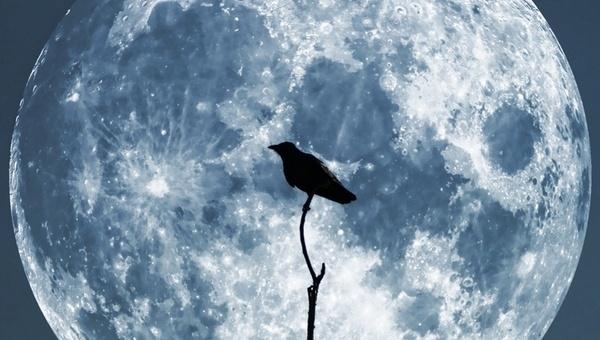 moon crow sky