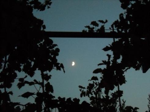 moon through the vineyards