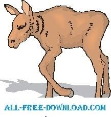 Moose Baby