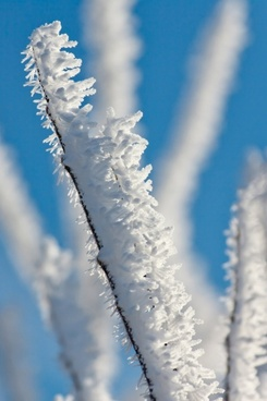morning frost on a branch