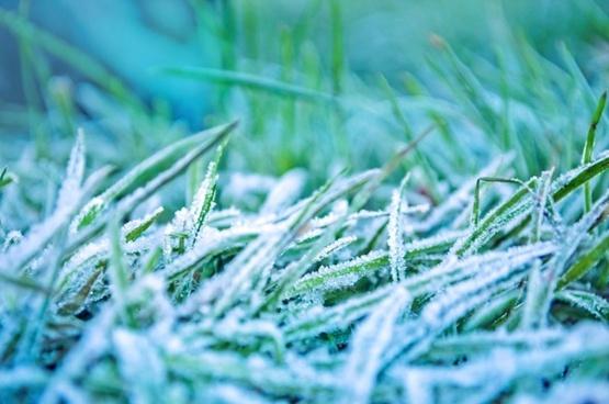 morning frozen grass