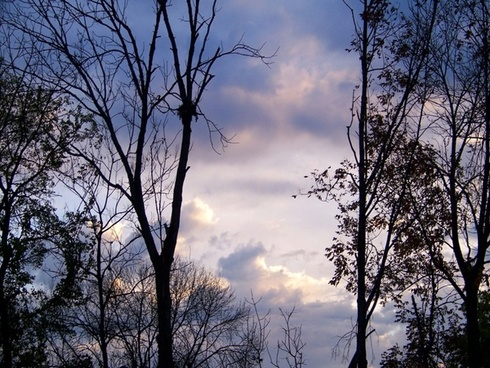 morning sky with trees 2