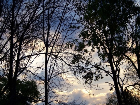 morning sky with trees 3