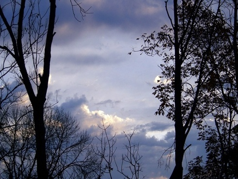 morning sky with trees 4