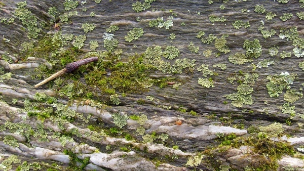 moss and mold