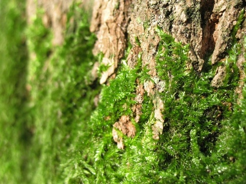 moss bark green