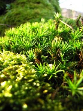 moss forest autumn