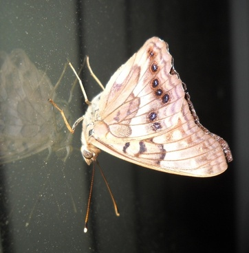 moth on window