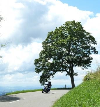 motorcycle summer tree