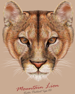 mountain lion head background vector