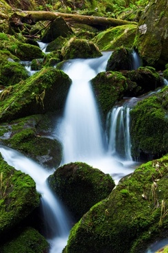 mountain stream and moss