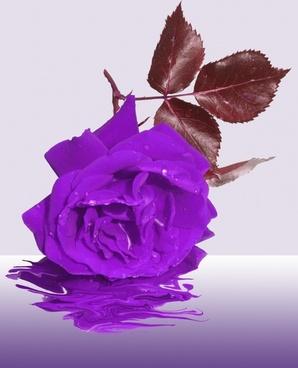 mourning flower memory