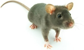 mouse picture 2