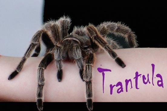 mr tarantula