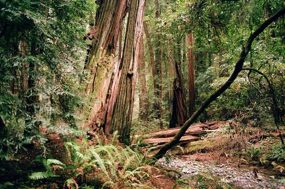 muir woods 63
