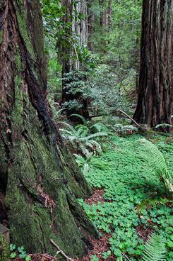 muir woods april 2015 1