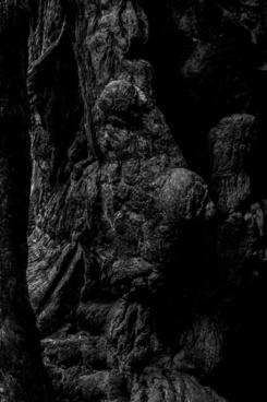 muir woods april 2015 3