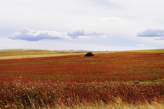 multicolored field