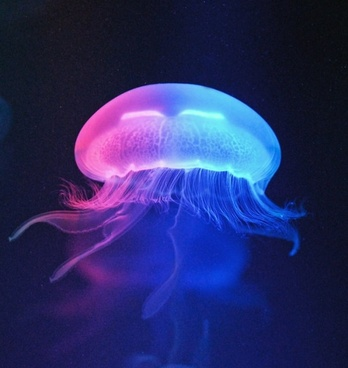 multicolored jellyfish