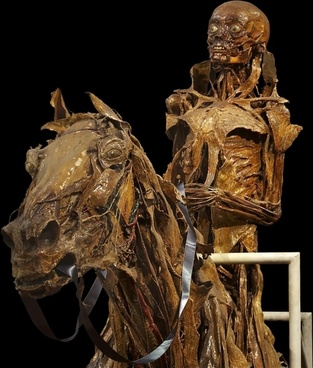mummification skeleton horse