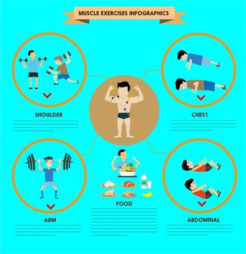 muscle exercises infographics illustration with various exercises