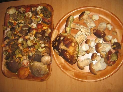 mushroom catch