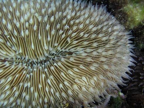 mushroom coral sea-life sea