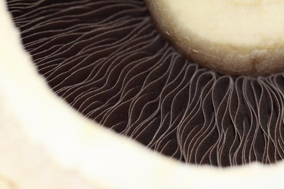 mushroom food white