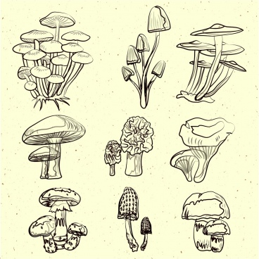 mushroom icons collection black white handdrawn sketch