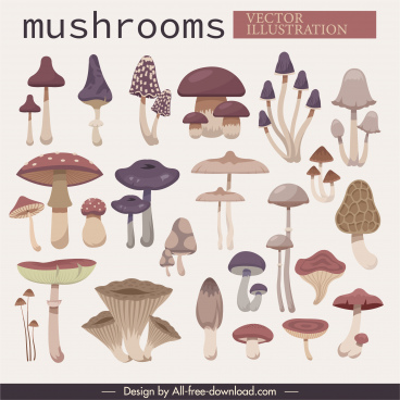 mushroom icons colored classical sketch
