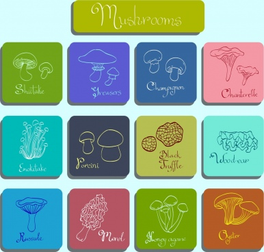 mushroom icons various flat types squares isolation