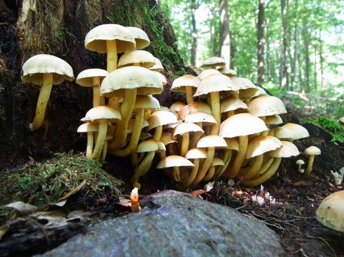 mushrooms forest forest floor