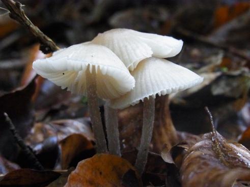 mushrooms ground nature
