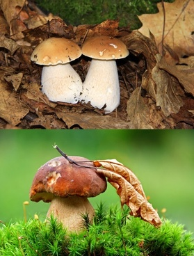 mushrooms hd picture 3