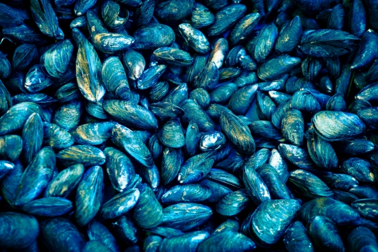 mussels shellfish