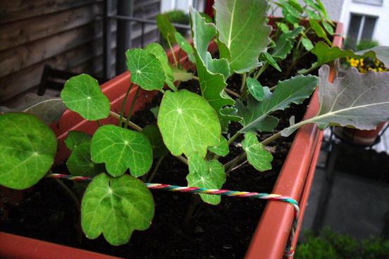 my garden ii