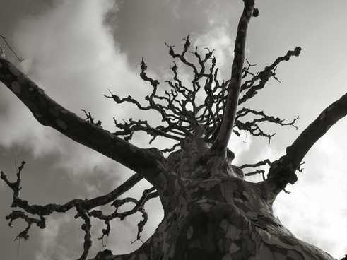 mysterious tree