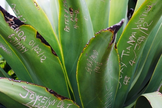 names on leaves