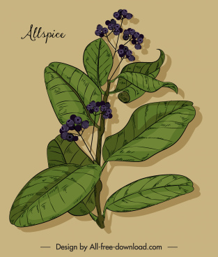 natural allspice painting colored vintage design