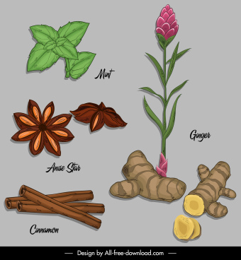 natural herb icons colored classical design