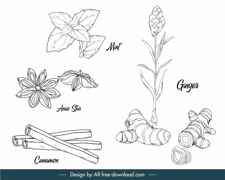natural herbs icons black white handdrawn outline