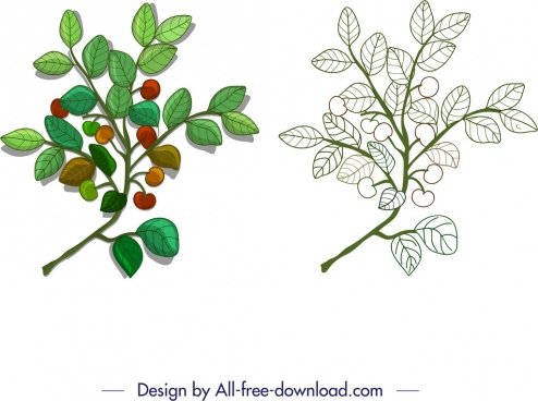 nature design element leaf fruit branch sketch