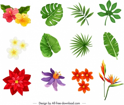 nature design elements colorful petals leaf sketch