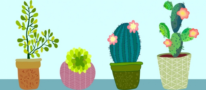 nature flower decoration painting cactus icons multicolored design