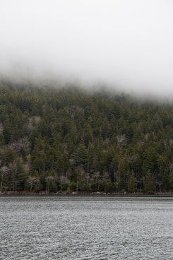 nature landscape lake water trees fog
