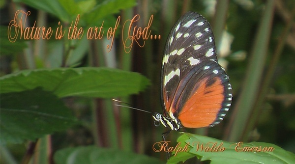nature quote with butterfly