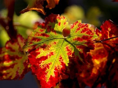 nature wine journal