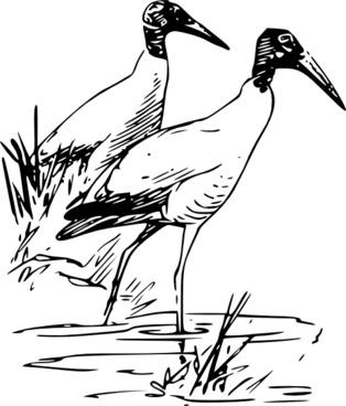 Nayrhcrel Wood Ibis clip art