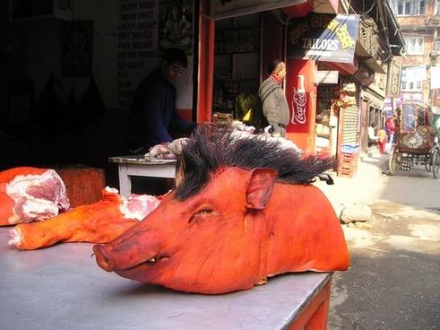 nepal pig head