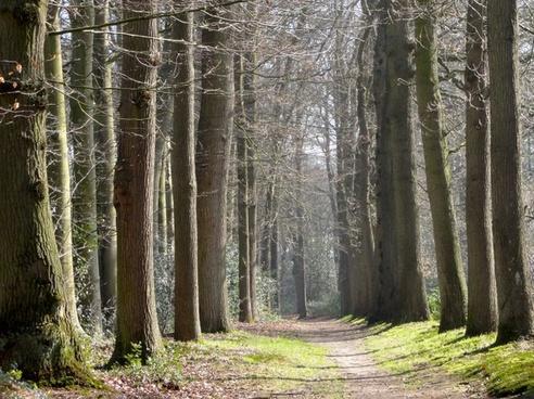 netherlands landscape forest